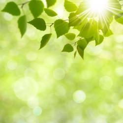 sunlight reflecting through tree leaves at crabtree dental in katy texas